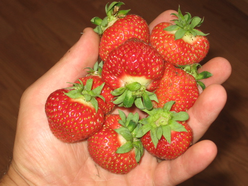 Fort Laramie Strawberries