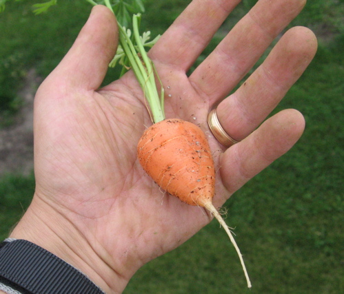 Parmex Mini Carrots