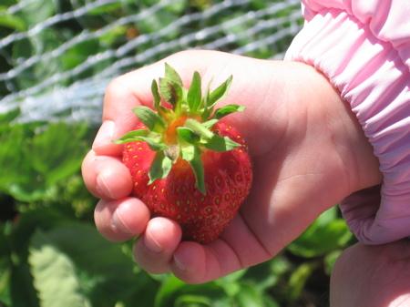 A delicious strawberry