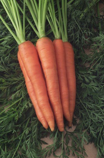 Sweetness III Carrots