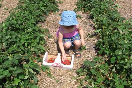 The Jungle Farm Strawberries